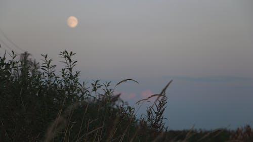 Fotobanka sbezplatnými fotkami na tému húšti, krajina, mesiac, noc
