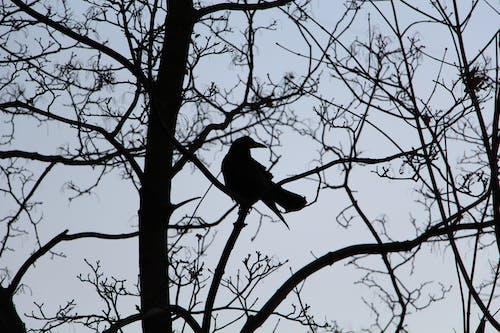 Fotobanka sbezplatnými fotkami na tému bočný pohľad, kontrast, strom, tmavý