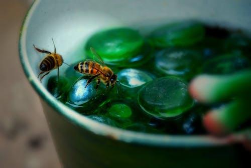 動物, 卵石, 昆蟲, 水 的 免费素材照片