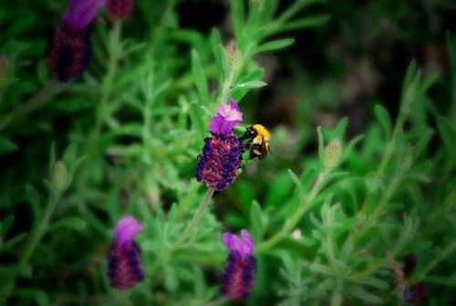 outfoors, 動物, 工厂, 昆蟲 的 免费素材照片