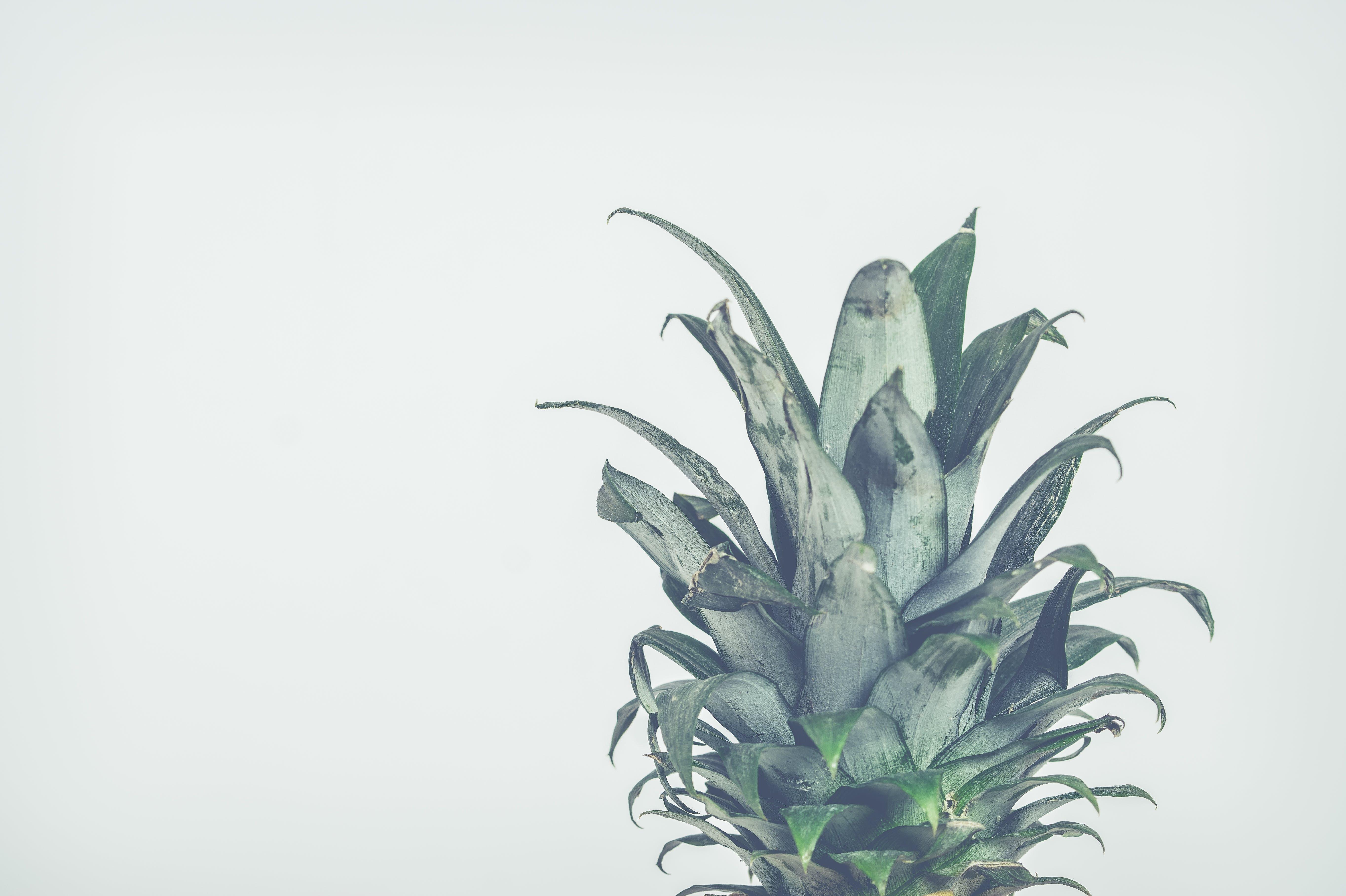 Gratis lagerfoto af ananas, tropiske frugter