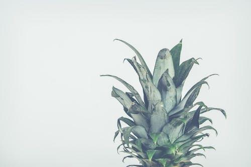 Ingyenes stockfotó ananász, trópusi gyümölcs témában
