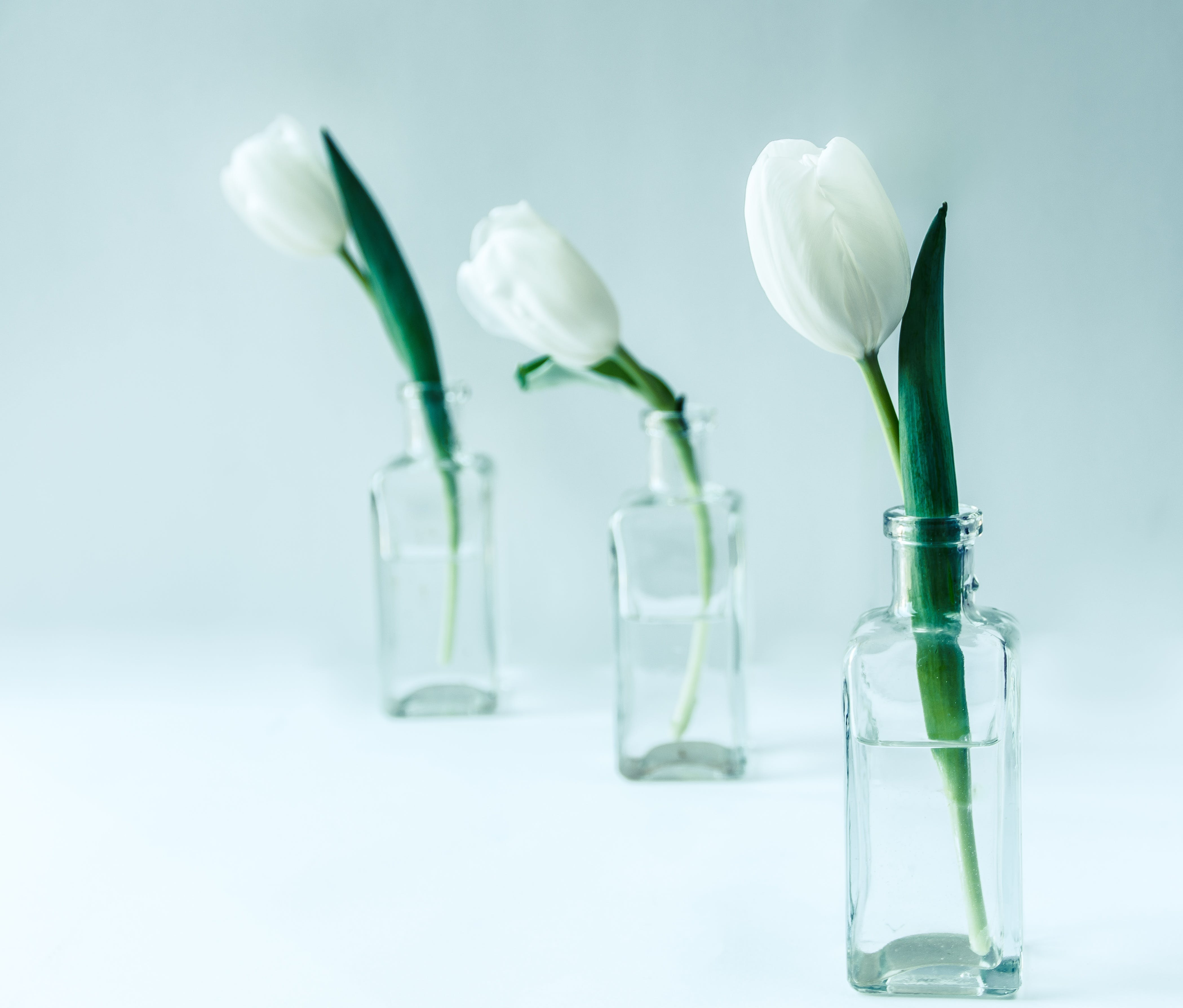 Three White Flowers on Clear Glass Bottles