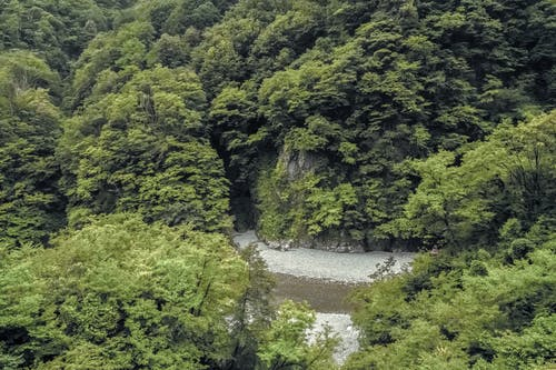 Ảnh lưu trữ miễn phí về ánh sáng ban ngày, cây, danh lam thắng cảnh, môi trường