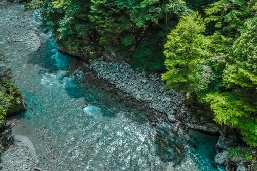 Photos gratuites de arbres, fleuve, flot, nature