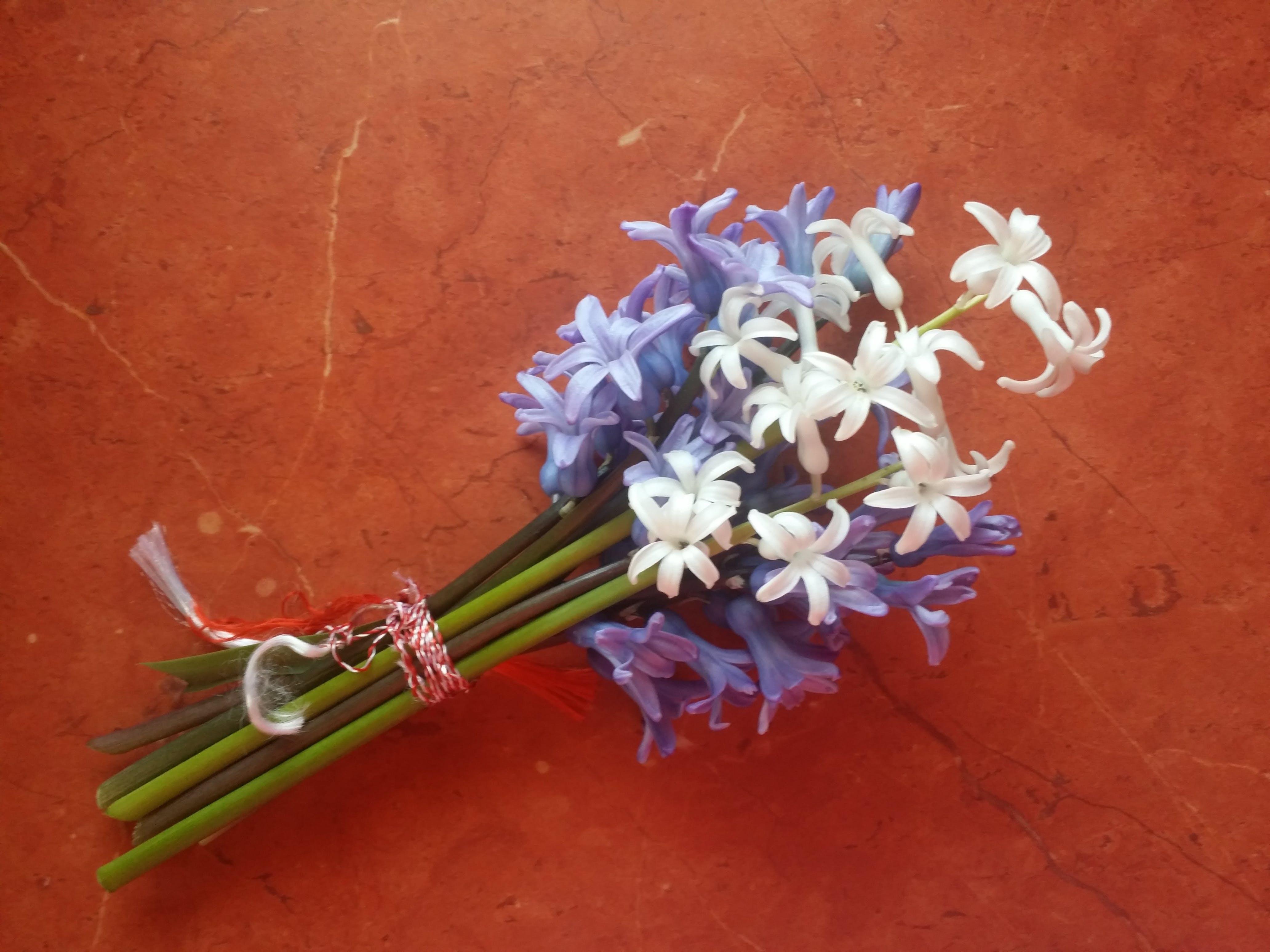 Бесплатное стоковое фото с весенние цветы, гиацинт, отпуск, свежие цветы
