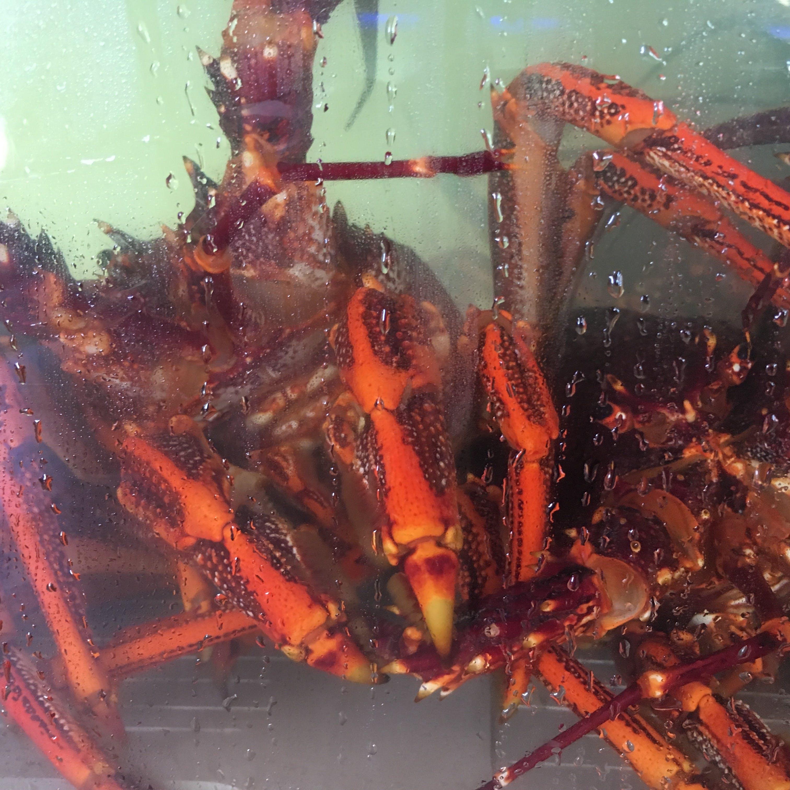 Kostenloses Stock Foto zu fischmarkt, hummer, hummer tank, meeresfrüchte