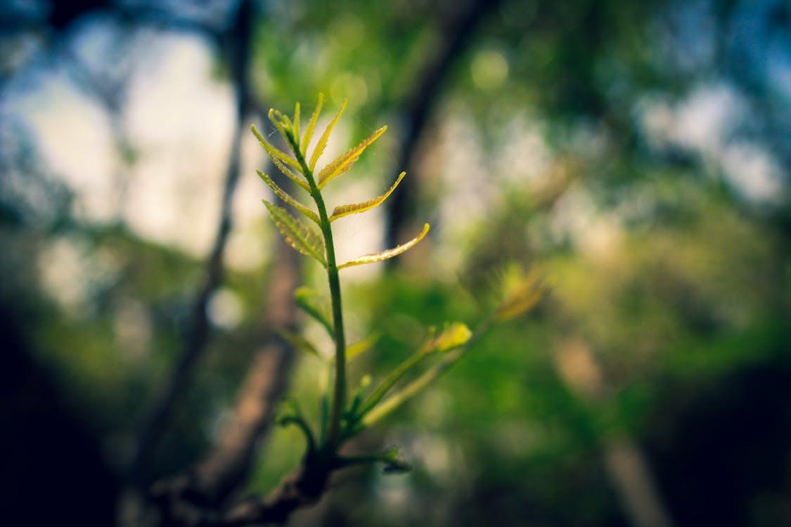 ecológico, folhas, fotografia de pequenos seres