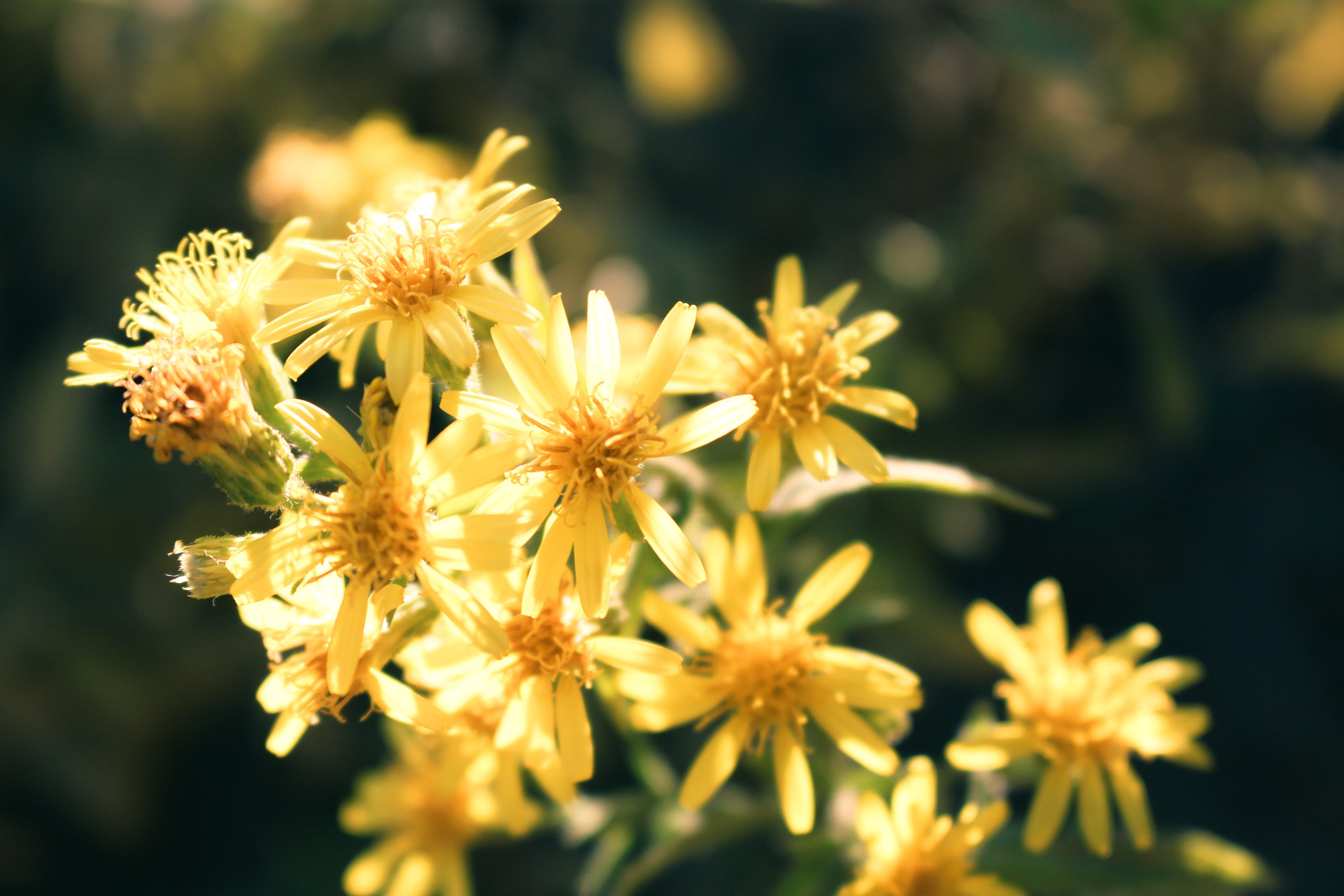 Kostenloses Stock Foto zu blühen, blumen, blütenblätter, flora