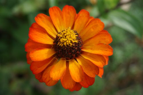 Free stock photo of beautiful, orange flower, yellow flower