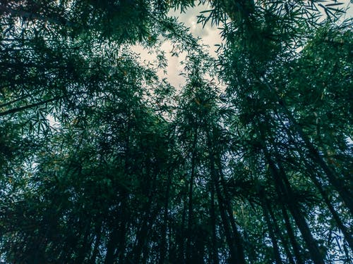 Free stock photo of bamboo, bamboo forest, forest background