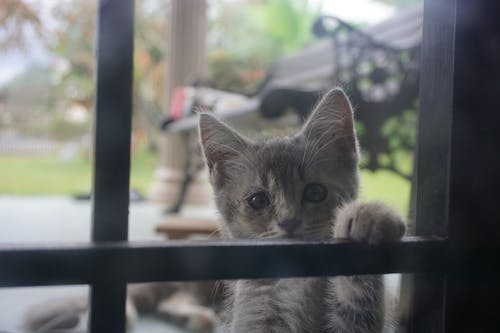 Free stock photo of cute, kitten, lonely, paw