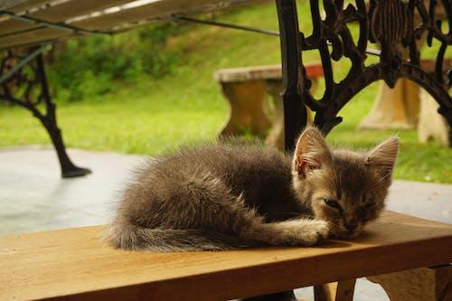 Free stock photo of evening, kitten, sleep