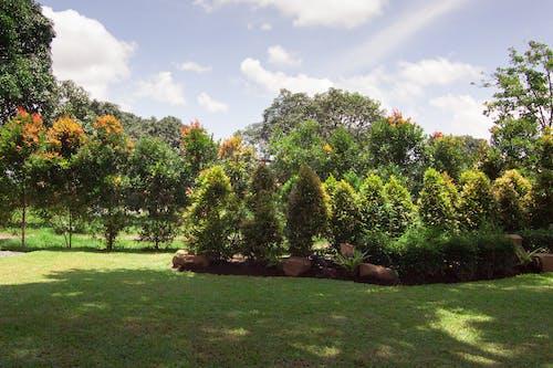 Free stock photo of garden, green background, green landscape