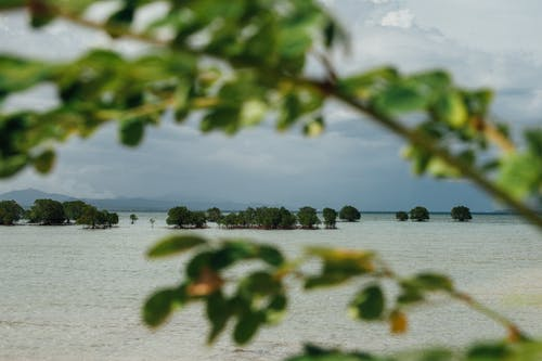 Free stock photo of beach background, mangrove forest, mangroves