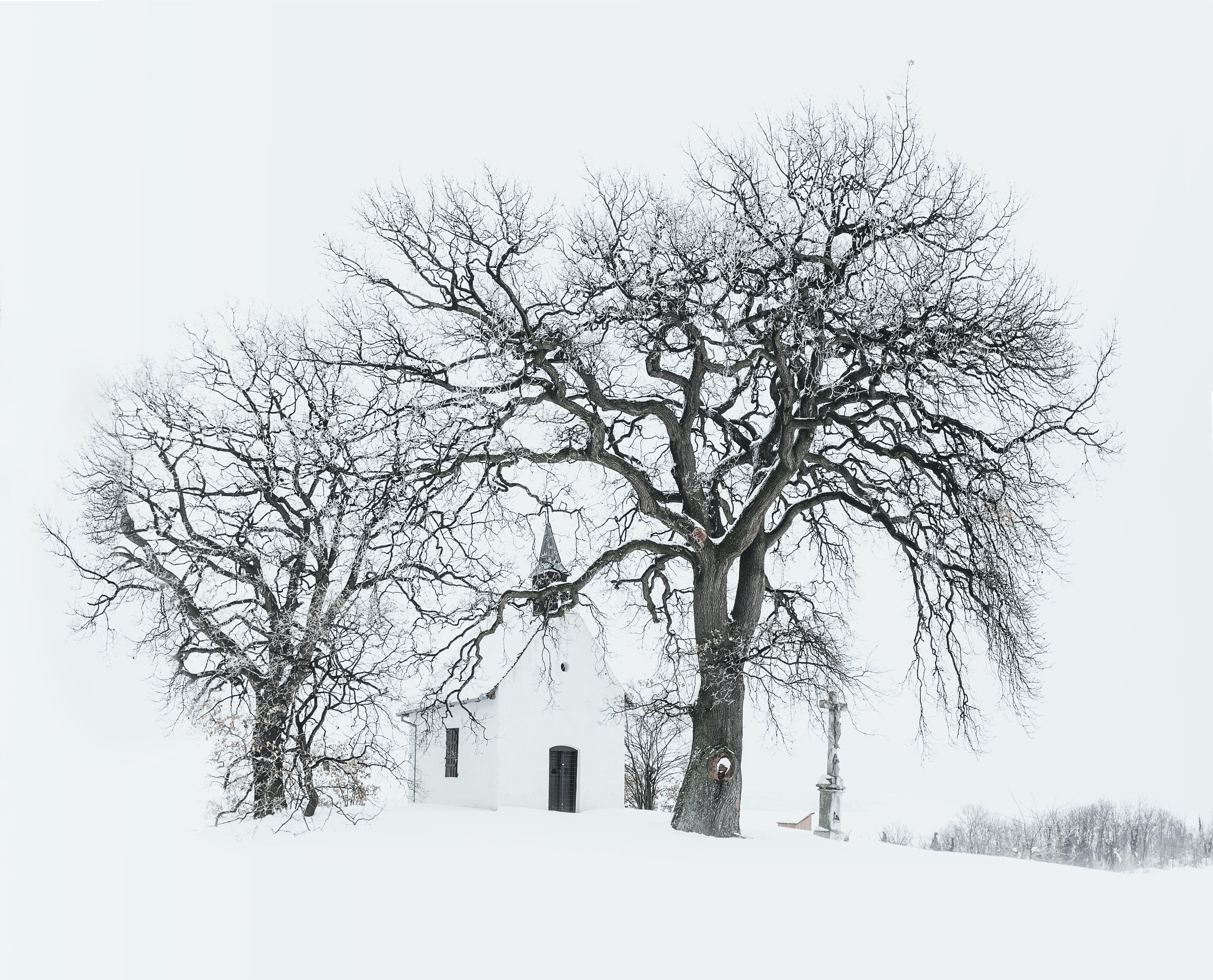 คลังภาพถ่ายฟรี ของ การแช่แข็ง, กิ่ง, ขาวดำ, ต้นไม้