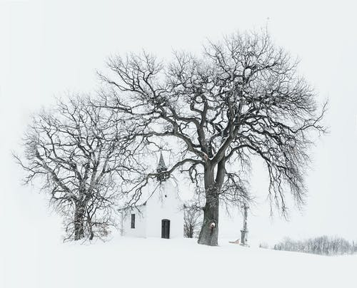 Foto d'estoc gratuïta de arbres, blanc i negre, branques, congelant