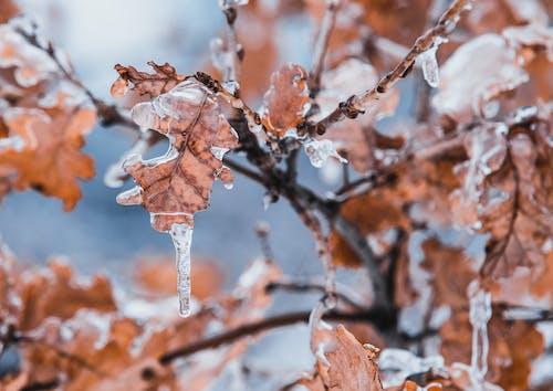 Gratis stockfoto met bevroren, ijs, ijspegels, jaargetij