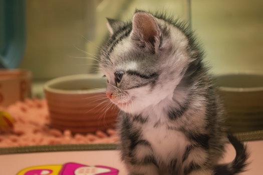 Free stock photo of 可爱, 猫, 街拍, 动物