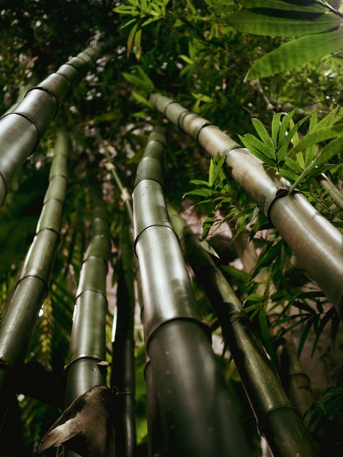 Green and Brown Bamboo Plants