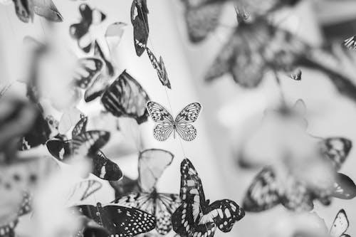 Ilmainen kuvapankkikuva tunnisteilla koristelu, mustavalkoinen, perhoset, sisustus