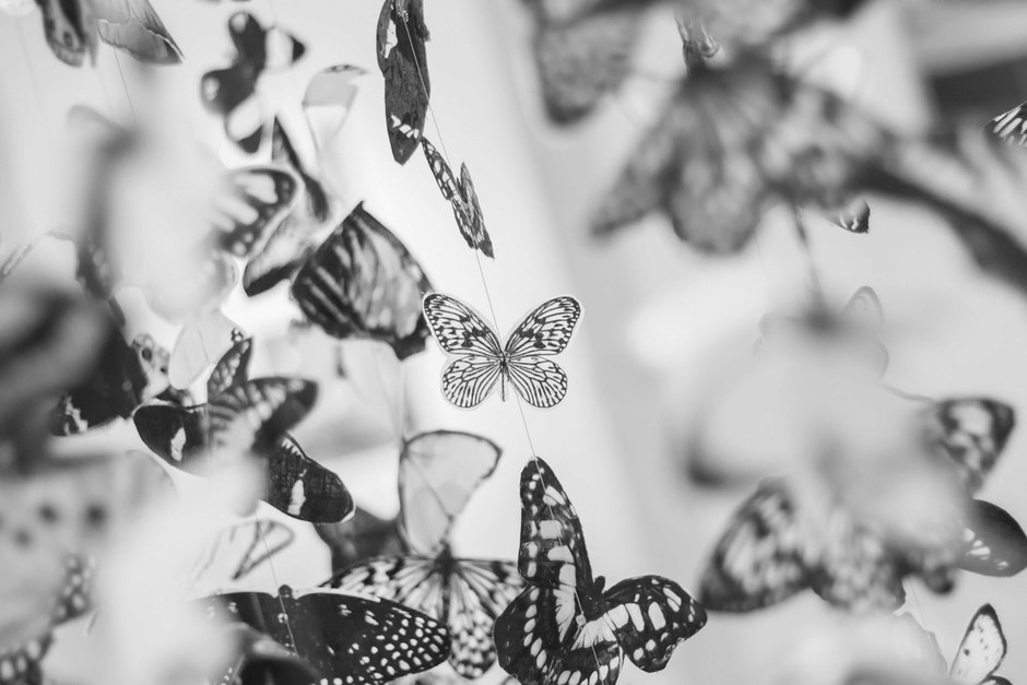 black-and-white, butterflies, decor