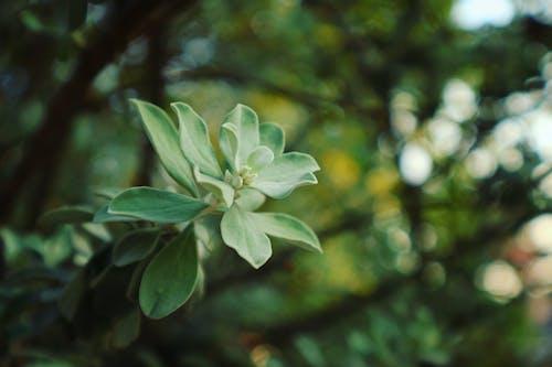 Kostenloses Stock Foto zu bäume, blätter, makro, nahansicht