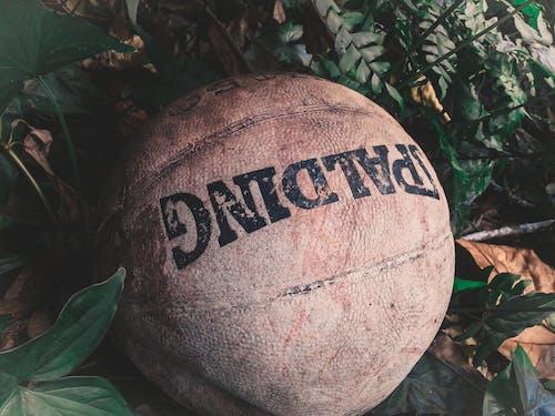 Základová fotografie zdarma na téma basketbal, koule, rostliny