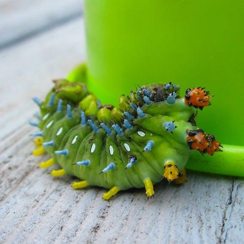 Gratis lagerfoto af grøn, insekt, larve