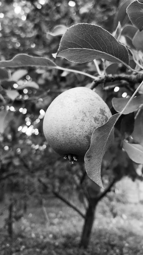 Free stock photo of black, black amp white, nature