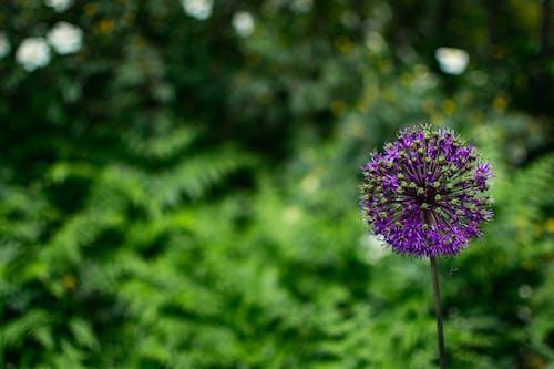 Free stock photo of beautiful flower, green, pretty background
