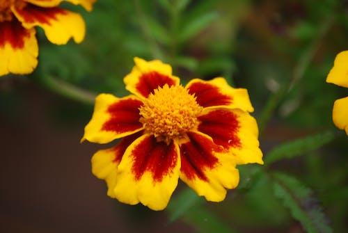 关闭了花, 宏觀, 工厂, 漂亮的花 的 免费素材照片