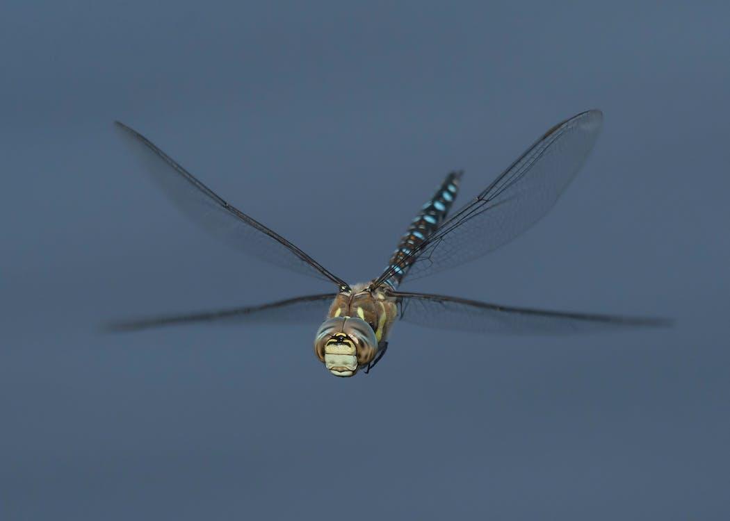 aile de libellule, flotter, libellule