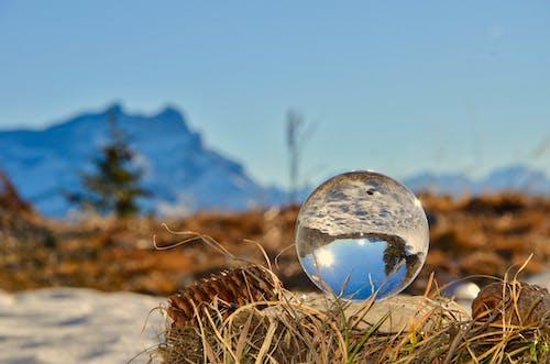 Imagine de stoc gratuită din arbori, culori, fundal încețoșat, glob de cristal