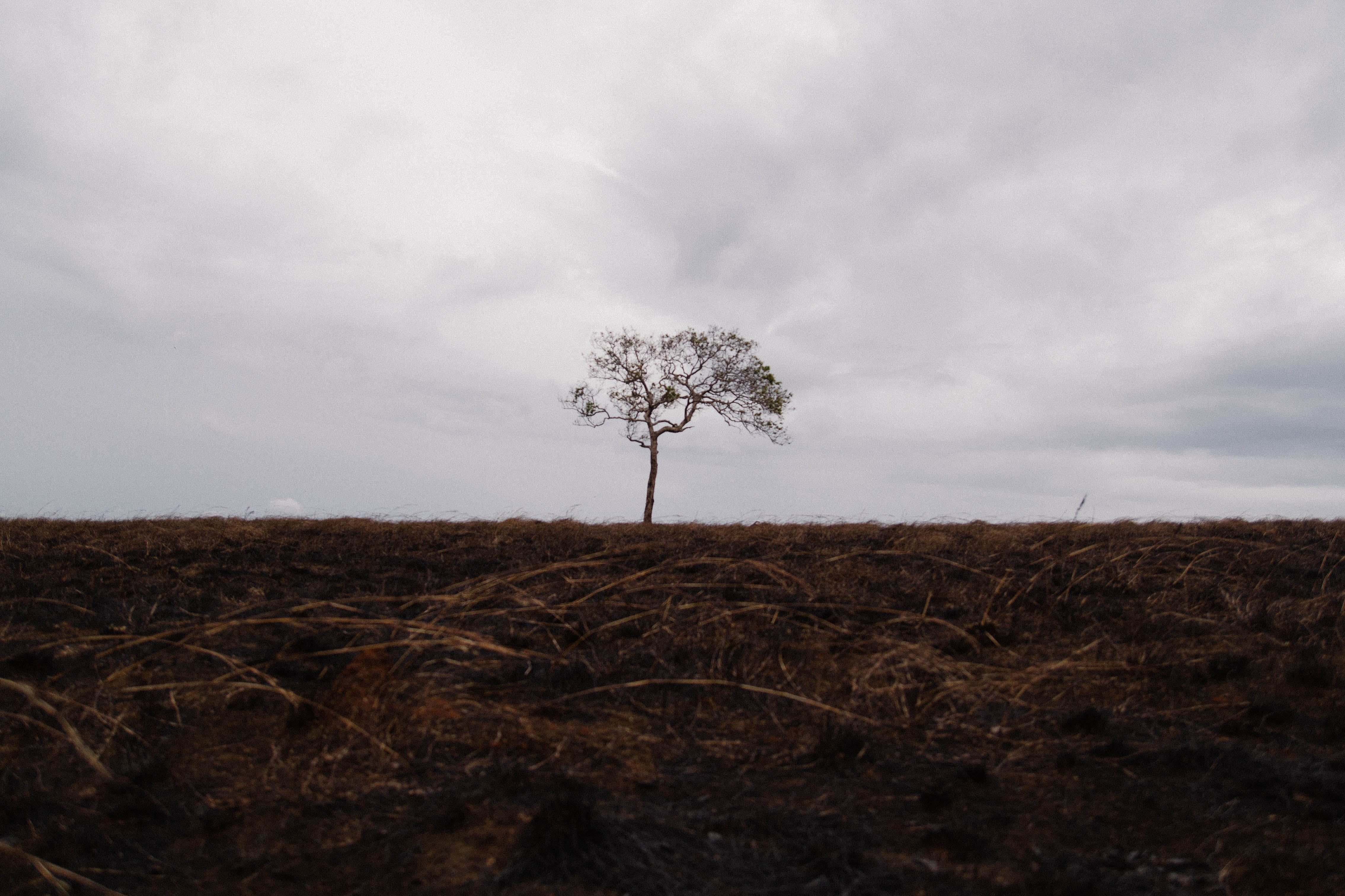 Free stock photo of #tree #lonely #alone #hill #fire #grass