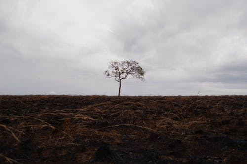 #tree #lonely #alone #hill #fire #grass 的 免費圖庫相片