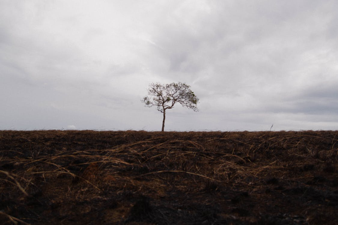 #tree #lonely #alone #hill #fire #grass