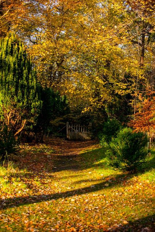 Foto profissional grátis de árvores, brilho do sol, calçada, folhas caídas