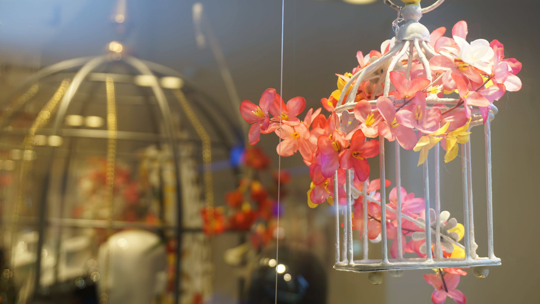 Free stock photo of cage, flowers, interior decoration, orange