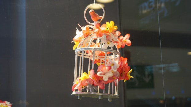 Free stock photo of flowers, yellow, orange, cage