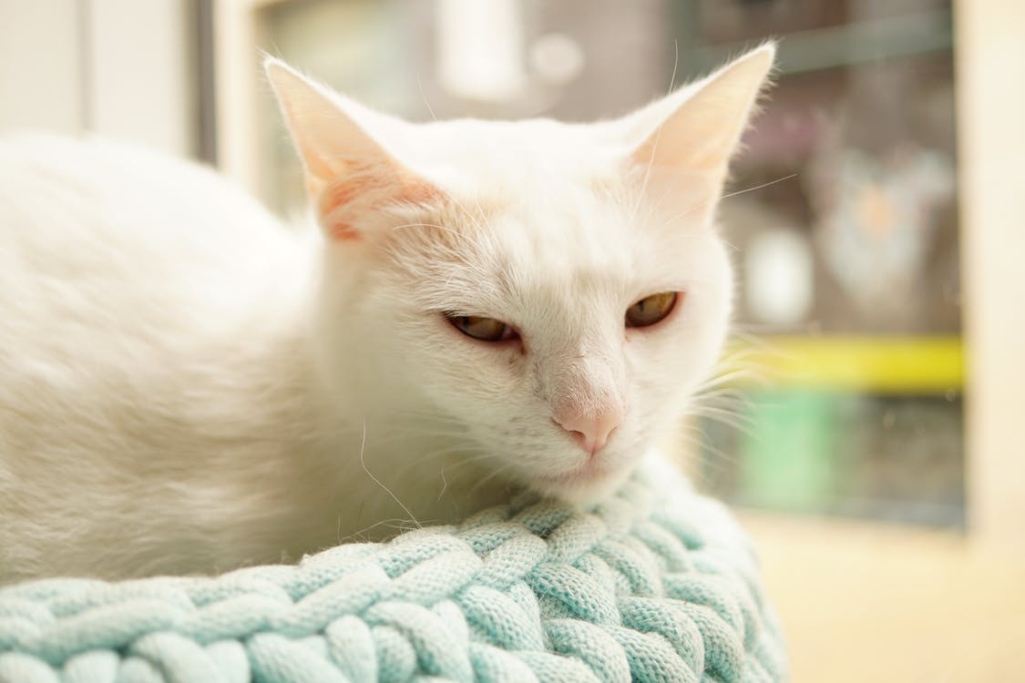White Cat on Green Knit Textile