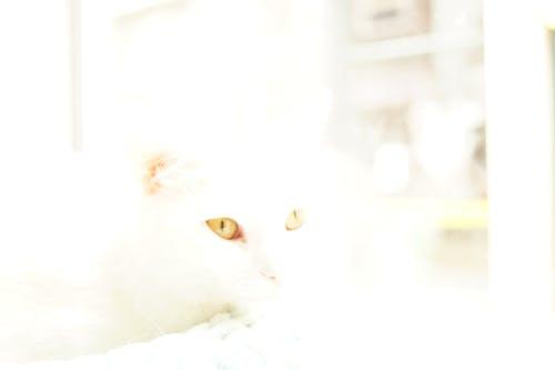 Gratis stockfoto met katten ogen