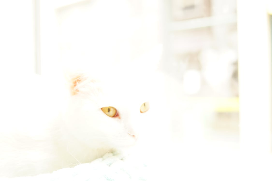 Free stock photo of cat eyes