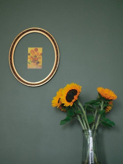 Foto d'estoc gratuïta de arranjament, art, botànic