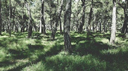 Foto d'estoc gratuïta de arbres, bosc, boscos, herba