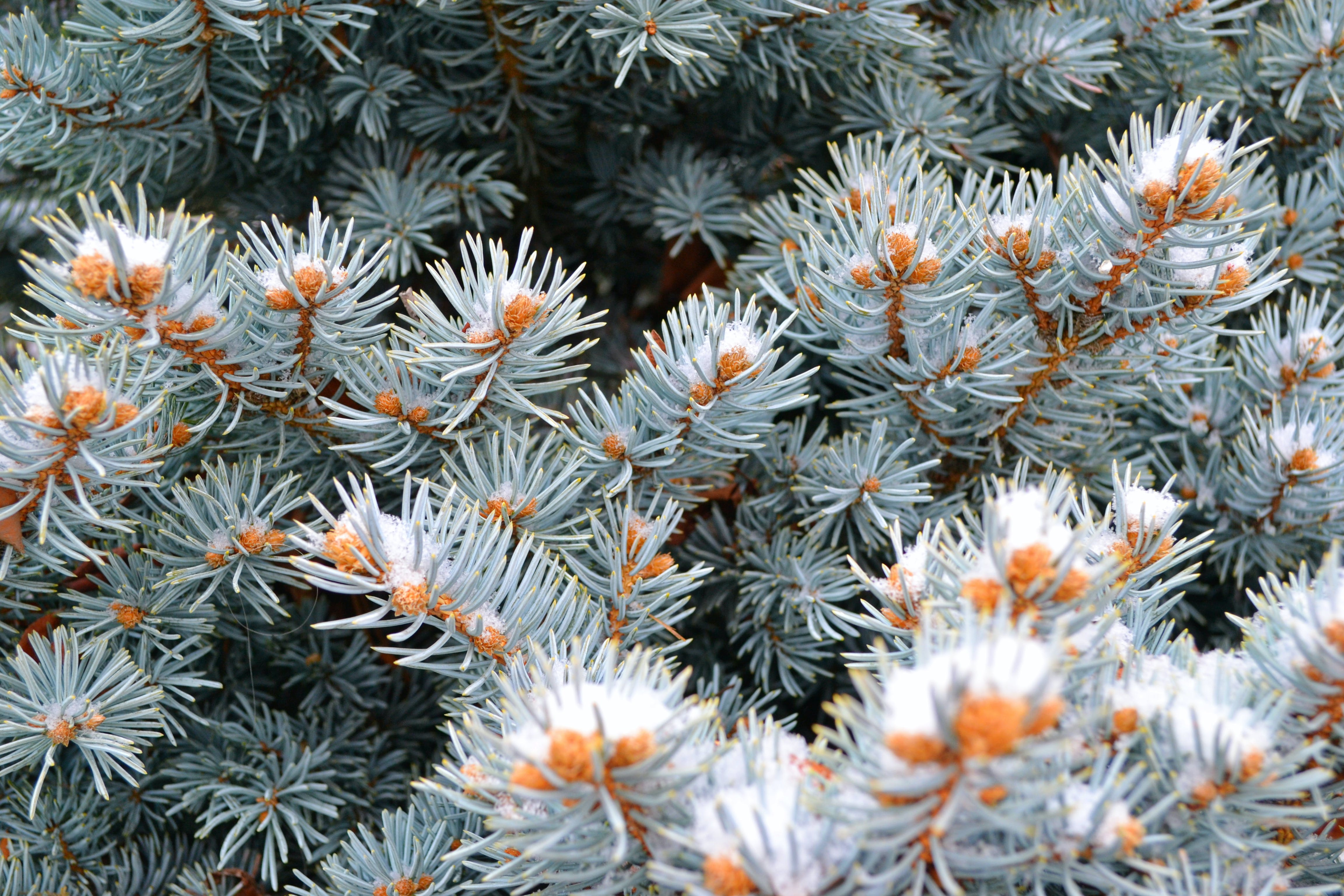 Gray-and-orange Plants in Closeup Photography