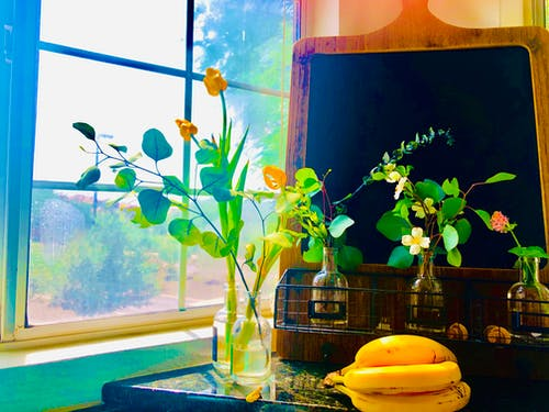 窗, 花, 花卉 的 免費圖庫相片