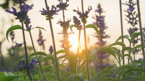 Fotos de stock gratuitas de puesta de sol