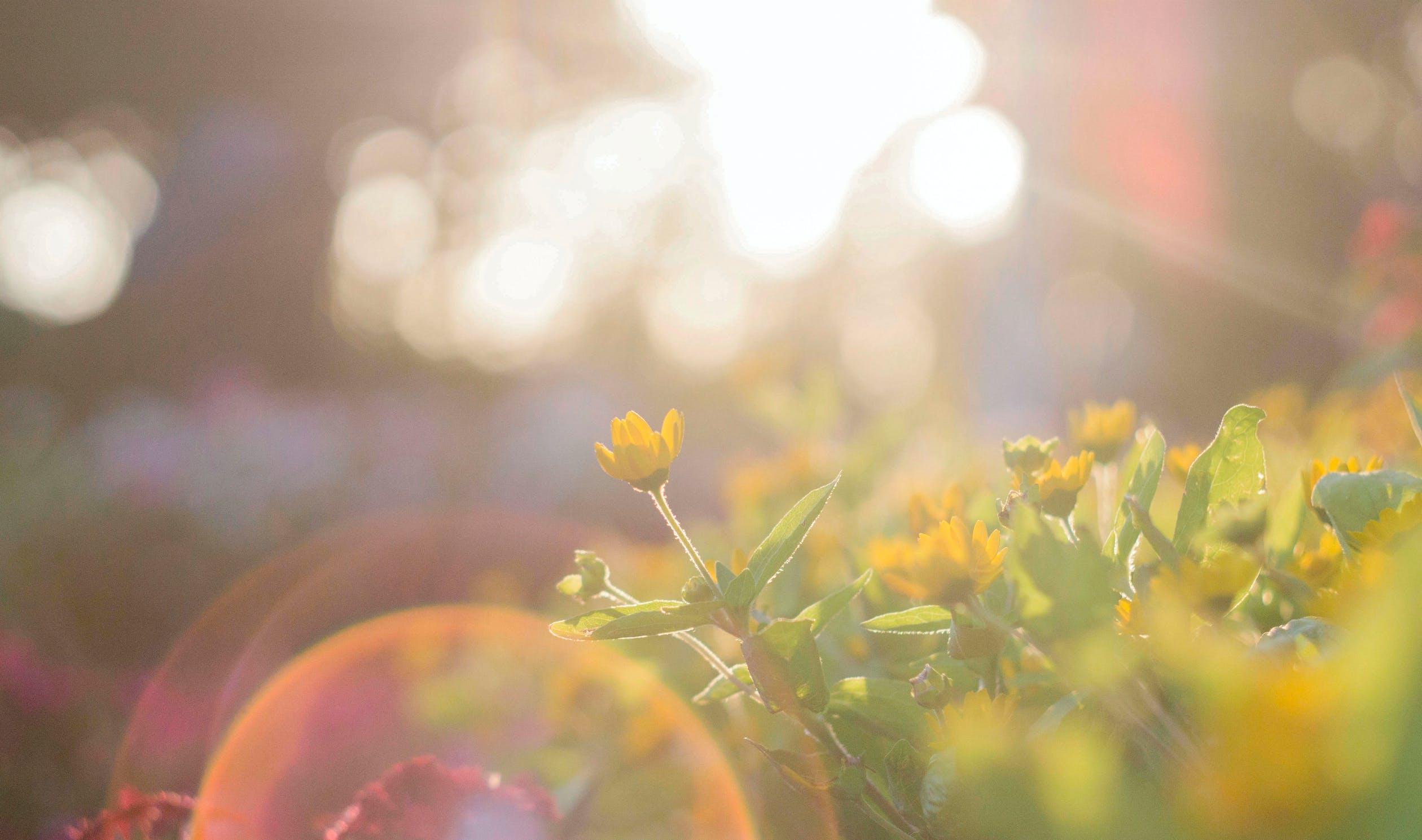 raised bed gardening plans - sunshine and shade