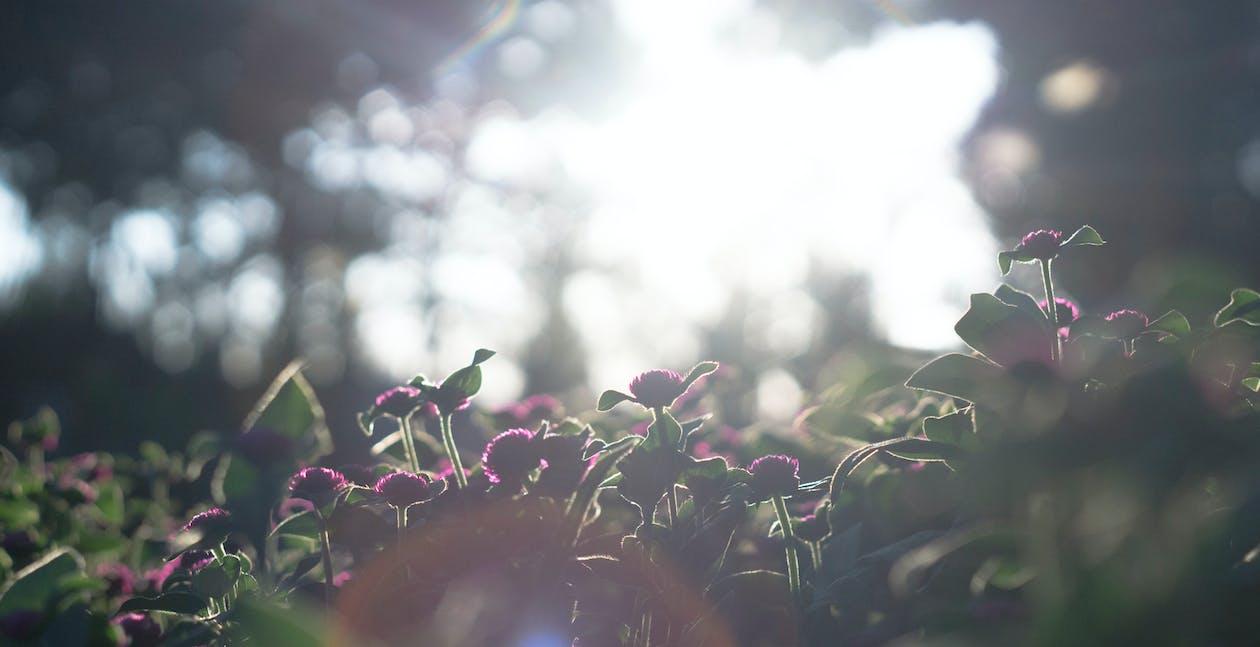 flora, głębia pola, jasny